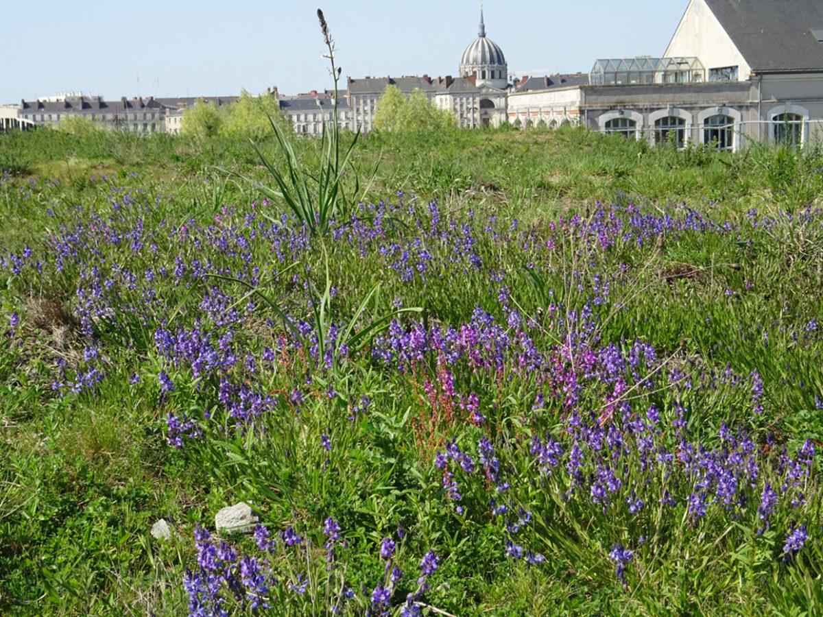 Nouvel article sur la toiture jardin de l'école Aimé Césaire