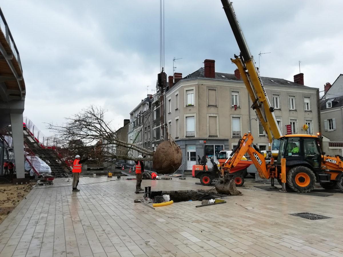 De grands arbres pour la place Giffard Langevin