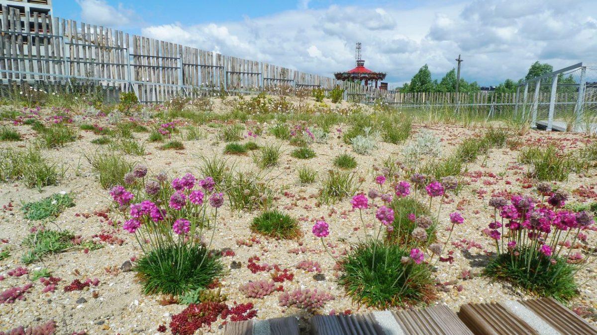 Un bel article sur la toiture jardin du groupe scolaire Aimé Césaire