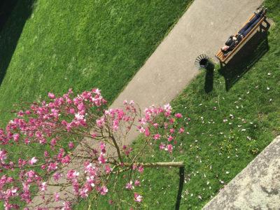 phytolab_printemps-magnolia_mars2017
